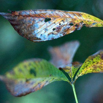 Bladeren in de herfst, net na de regen van Anne Hana