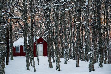 Noors hutje in de sneeuw - Vesteralen, Noorwegen von Martijn Smeets