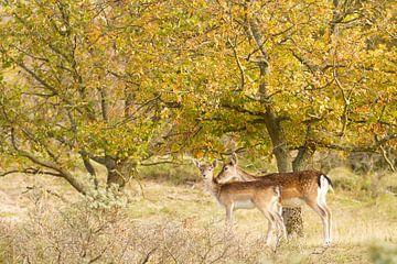 Moederliefde, herten in het bos van Marianne Jonkman