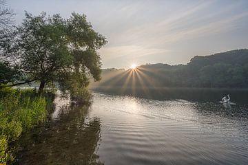 Schwan während eines strahlenden Sonnenaufgangs im Cranenweyer