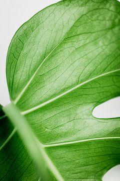 Monstera Deliciosa | Plant  Art Print | Gatenplant van Sarina Dekker