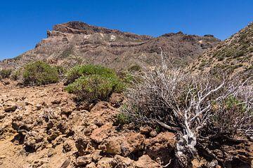 Landscape on the canary island Tenerife van