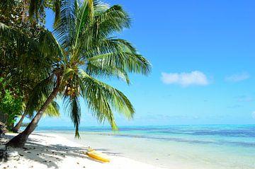 Palme und ein tropischer weißer Sandstrand von iPics Photography