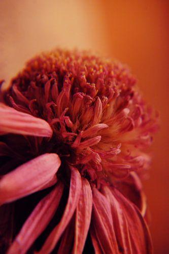 GARDEN FLOWER - ORIGINAL