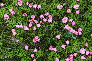Bloemen in het mos van Kyoto van Mickéle Godderis