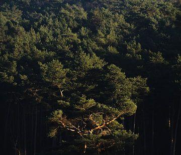 Bäume #5 von Márton Gutmayer