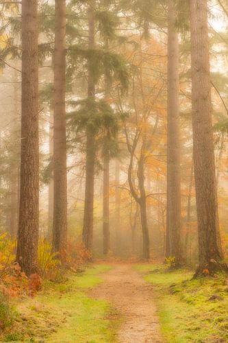 Pad door een mistig dennenbos tijdens een mooie herfstochtend