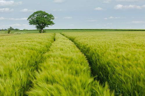 Vlaamse Ardennen van