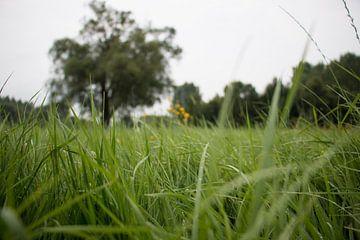 Hoog gras in de groene velden. van Simon Peeters