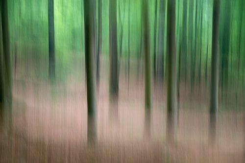 Bomen in beweging - lente 2018 - 3 van