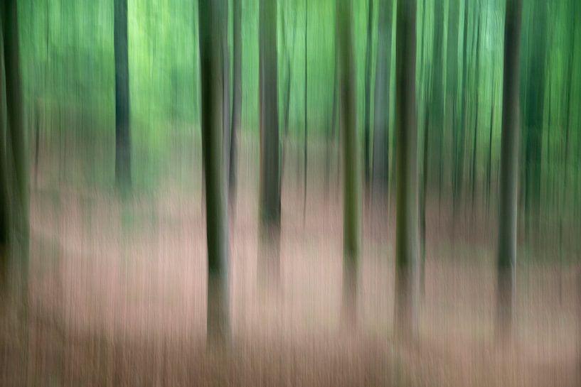 Bomen in beweging - lente 2018 - 3 van Danny Budts