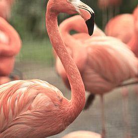 Flamingo's von Jasper van de Gein Photography