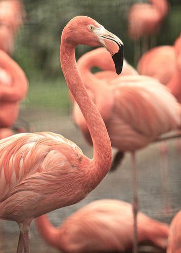 Flamingo's von