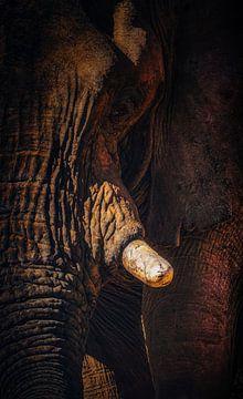 Loxodanta Africana_V van Joris Pannemans - Loris Photography