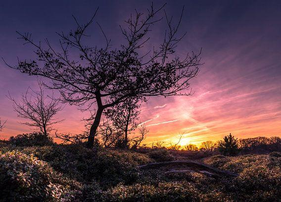 Zonsondergang nationaal park de Sallandse heuvelrug van Martijn van Steenbergen