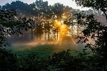 Mistige ochtend met gouden zonlicht. van Henk Van Nunen