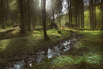 im Wald von Dieter Beselt