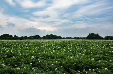 Bloemenveld-aardappelveld van Cilia Brandts