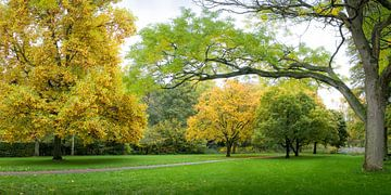Herfstpanorama Clingendael van Rob IJsselstein