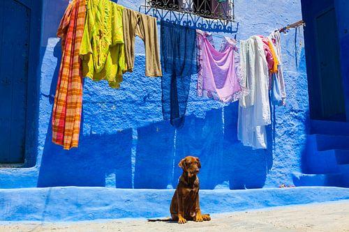 Marokko van