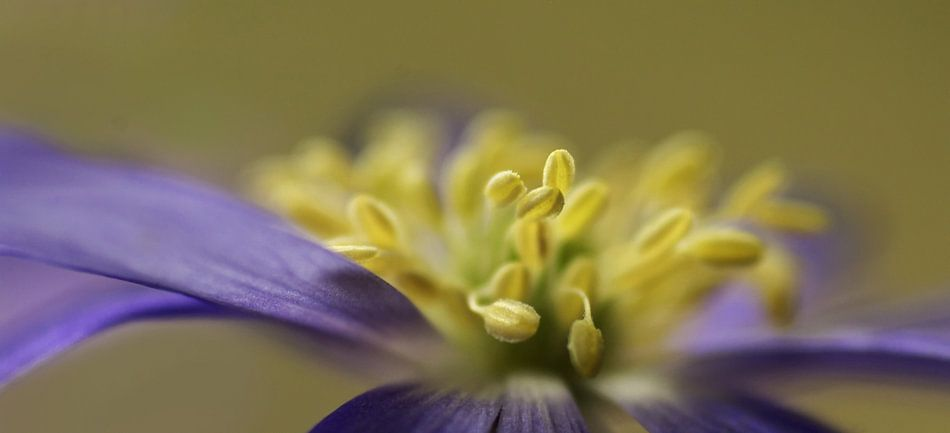 Spring Time flower van Marlies Prieckaerts