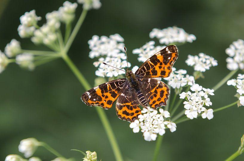 Gekleurde vlinder van Mark Bolijn