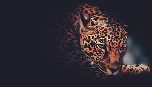 Duistere Jaguar - Panter - Roofdier - Dieren - Ogen - Panterprint van Hendrik Jonkman