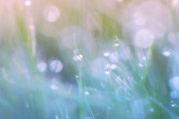 Graspastell von Daniela Beyer