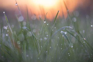 zonsopkomst over het weiland van Tania Perneel