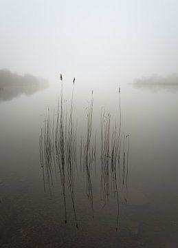 Schilf im Nebel, David Ahern von 1x