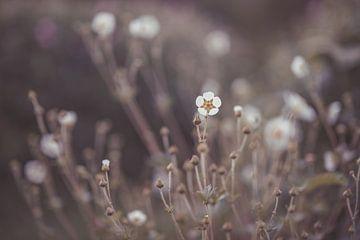 bloemen part 139 van Tania Perneel