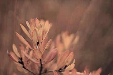 Natur, Nahaufnahme von Laura Reedijk