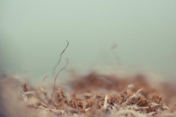 Korstmos op een bruine ondergrond, een groene achtergrond