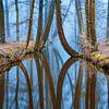 River of Reflections 2 van Lars van de Goor thumbnail