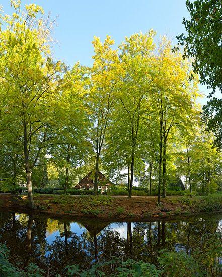 Herfstbos van Rene van der Meer