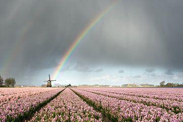 Regenboog boven een molen en roze hyacinten van iPics Photography