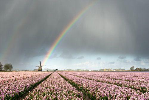 Regenbogen über Windmühlen- und Blumenfeldern von iPics Photography