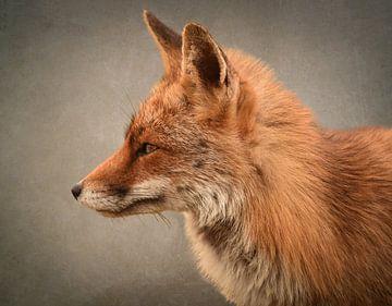 Porträt eines Fuchses von Marjolein van Middelkoop