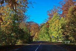 Weg in de herfst (Denemarken)