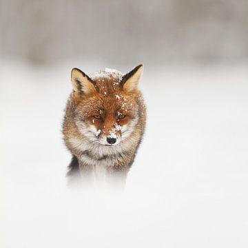 Winterwonderland von Pim Leijen