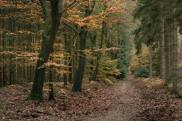 Herfstbos met zandpad van Peter Bolman