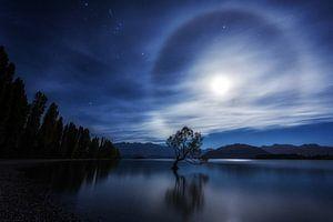That Wanaka Tree at Night