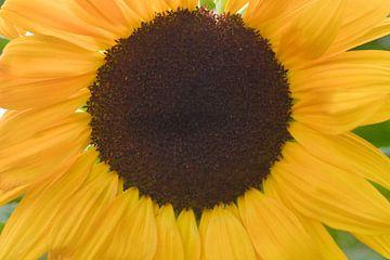 Close up  van een gele zonnebloem van J..M de Jong-Jansen