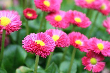 Bloemen van Lotte Klumper