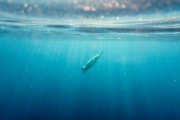 Ein Tauchgang in die Tiefe von Jonathan Krijgsman