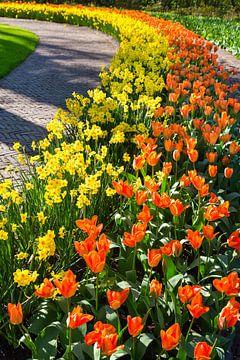 Rijen Narcissen en tulpen langs gebogen wandelpad van Ben Schonewille