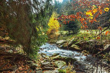 Gouden herfst in de Zwarte Watervallei van Johnny Flash