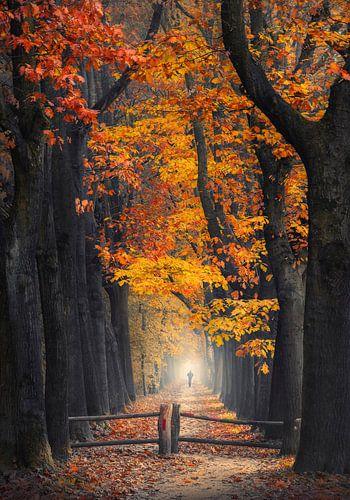 Man wandelt in mistig herfst bos van Rob Visser