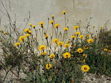 Yellow wall sunshine flowers von Karen Bos