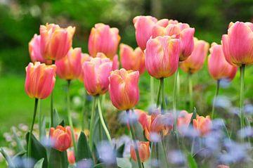 Roze tulpen van Corinne Welp